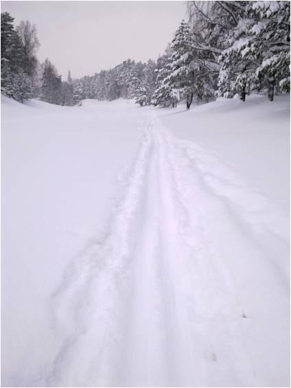 vinterbild-t-hemsidan